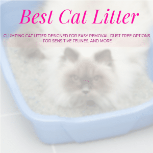 The Best Cat Litter for Odor Control Review