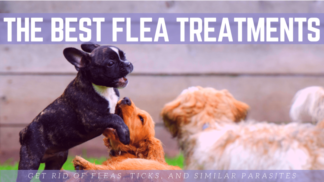 The Best Flea Treatments for Your Dog