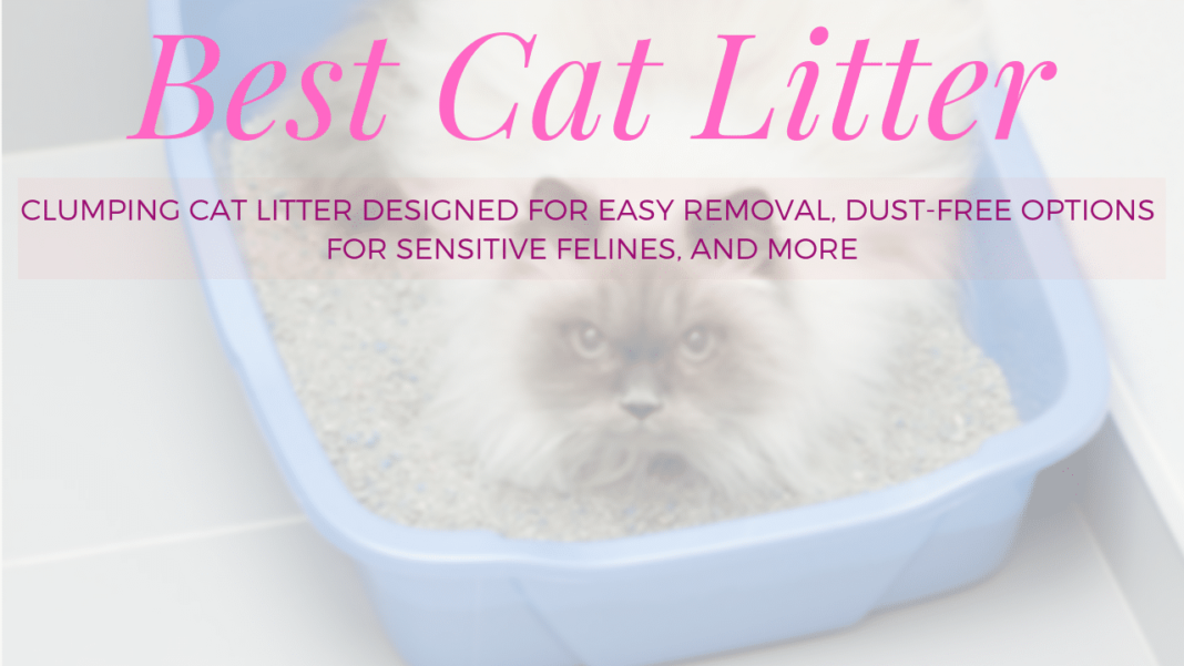 best cat litter featured