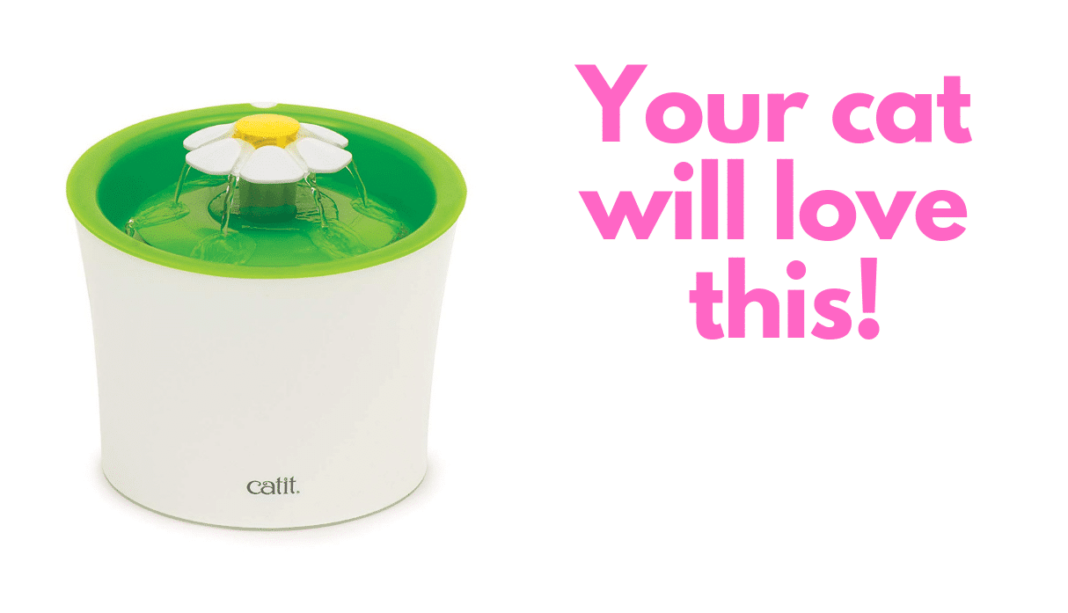catit drinking fountain