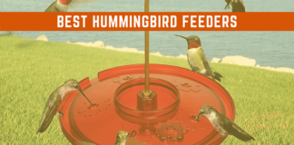 best hummingbird feeder featured