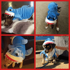 dog shark costume